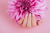 Closeup Fingernails With Pink Fashion Manicure, Cupped Woman Beautiful Manicured Hands Holding Pink  poster