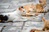 Homeless Cats Lie On The Stone Pavement Of The Old City poster
