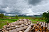 pic of afforestation  - Sawed Firewood Dropped in a Pile Italy - JPG