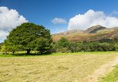 Newly Mown Hay In Buttermere Lake District
