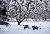December Benches
