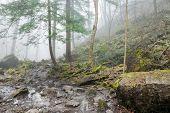 Wet Fog