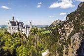Neuschwanstein Castle And Wildlife