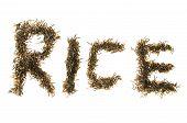Wild Rice Spelling Rice