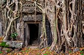 Ancient Stone Temple Door And Tree Roots