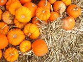 tiny mini pumpkins on hay