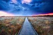 picture of swamps  - wooden path on swamp with flowering cottograss at sunset - JPG