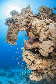 Beautiful Tropical Coral Reef Scene