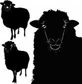 animal sheep lamb vector