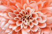 Macro Of Pink Flower