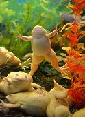 aquarium frog