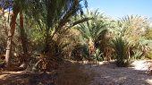 Bedouin oasis