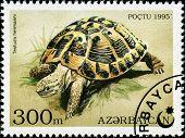 AZERBAIJAN - CIRCA 1995: A stamp printed in Azerbaijan shows an Indian Star Tortoise, Geochelone elegans which is found in India and Sri Lanka, circa 1995.