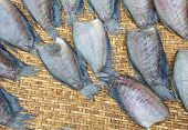 drying snakeskin gourami fish in threshing basket