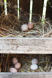 foto of hatcher  - Freshly laid eggs in hay nest boxes outdoors with selective focus - JPG