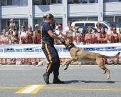 Police Dog Fun