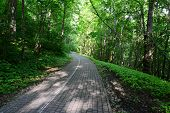 Driveway in the forest. Sigulda.