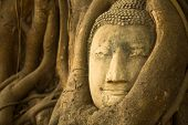 Close-up: the Head of Buddha in Wat Mahathat, Thailand.