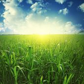 Sunlight in blue sky and green grass field.