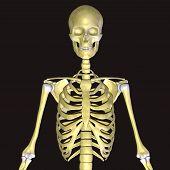 Постер, плакат: skeleton