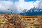 Autumn In Patagonia. Torres Del Paine