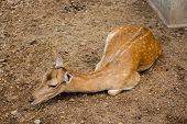 gazelle set on land at sunny day