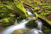 mountain stream among green stones in deep forest