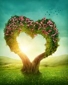 picture of grass bird  - Heart shaped tree in the meadow - JPG