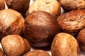Betel nut unroasted (Areca catechu)