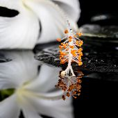 Beautiful Spa Concept Of Delicate White Hibiscus, Zen Stones With Drops And Ice On Water, Closeup