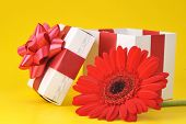 Gift Box And Red Flower