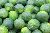big fresh  sweet green water melons