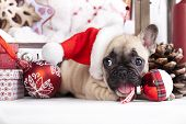 image of puppy christmas  - puppy christmas French Bulldog - JPG