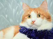 Funny Red And White Cat With Christmas Tinsel Decoration