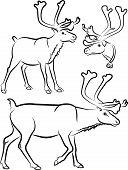 reindeer - vector outlines