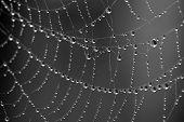 Gotas de Rocío sobre la araña
