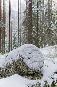 Sawn Timber In The Snowy Winter Forest