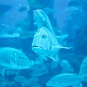 Aquarium in Dubai Mall. UAE