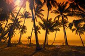Tropical Paradise: Sunset At The Seaside - Dark Silhouettes Of Palm Trees, Hammocks And Amazing Clou