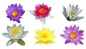 Water Lily Set