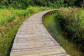 Footbridge through wetland