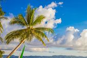 palm tree on sky and sunset beach background