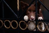 picture of border collie  - Border Collie dog trained to perform tricks in the center of Moscow - JPG