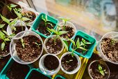 stock photo of seed  - Agriculture Seeding Plant seed growing concept selective focus - JPG
