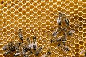 foto of swarm  - bees swarming on a honeycomb - JPG