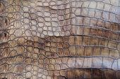 pic of crocodile  - The skin of the big crocodile - JPG