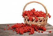 Постер, плакат: Fresh Berries Red Currant In A Basket Isolated