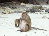 stock photo of phi phi  - Monkey beach - JPG