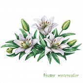 picture of white lily  - Watercolor bouquet of white lilies with green leaves - JPG