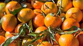 stock photo of satsuma  - A market stall loaded with satsumas with leaves on - JPG